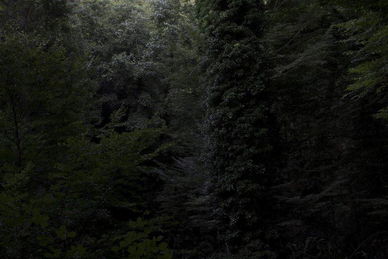 Foresta Umbra, 2014